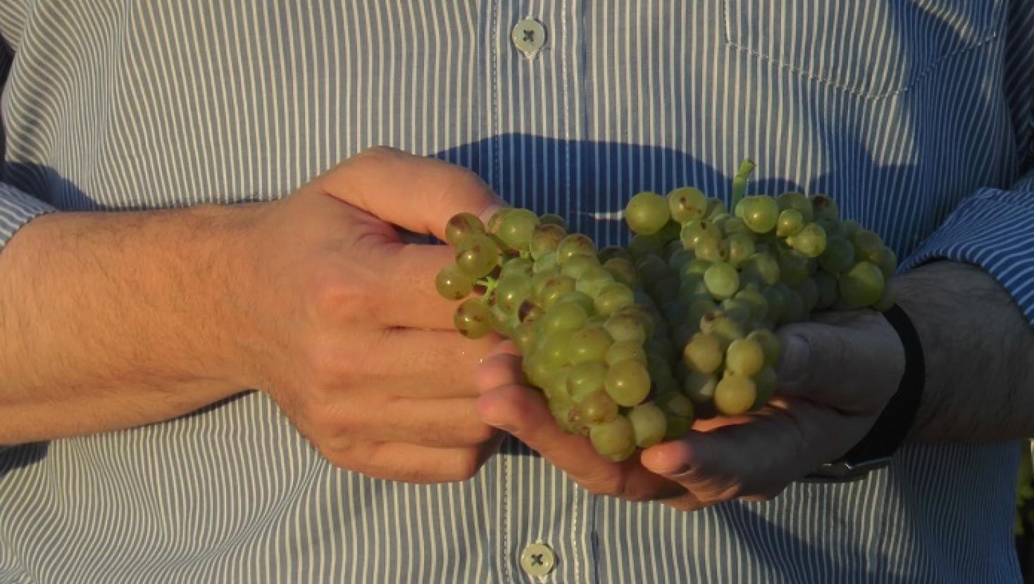 Los Vinos de La Mancha Prometen